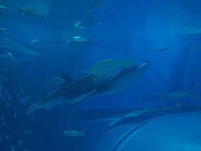 日本各地の水族館と取引