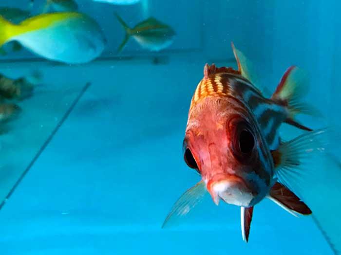 観賞魚などの輸出入