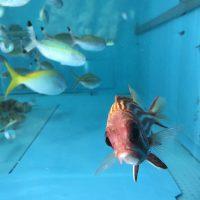 韓国向け 観賞魚 輸出プロジェクト